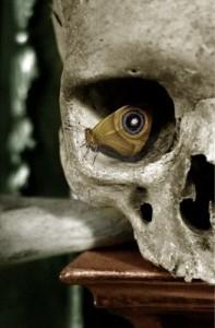 scullbutterflyeye