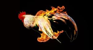 tűz kakas